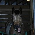 Laughing Horse by David Yocum