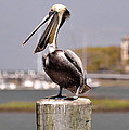 Laughing Pelican by Kay Lovingood