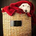 Laundry Day by Edward Fielding