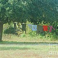 Laundry Hanging From The Tree by Michelle Powell
