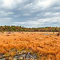 Laurel Summit State Park Bog by Steve Harrington