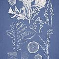 Laurencia Concinna And Hypnea Musciformis by Aged Pixel