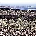 Lava Landscaped by Douglas Barnard