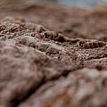 Lava Rock Landscape II by Linda Brody
