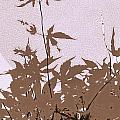 Lavender And Taupe Haiku by Kathy Barney