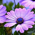 Lavender Beauties by Maria Urso