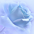 Lavender Blue Rose Flower by Jennie Marie Schell