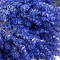 Lavender Bunch Flowers by Susan Garren
