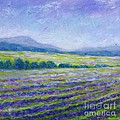 Lavender Field In Provence by Cristina Stefan