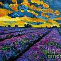 Lavender Fields At Dusk by Julie Brugh Riffey
