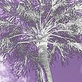 Lavender Glow Palm Tree Myakka River State Park Usa by Sally Rockefeller