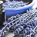 Lavender Herb And Essential Oil by Elena Elisseeva