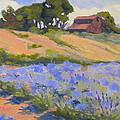 Lavender Hollow Farm by Rhett Regina Owings