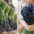 Lavender by Kirstin Mckee