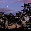 Lavender Moon Twilight by Gem S Visionary