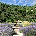 Lavender Path by Steve  Ondrus