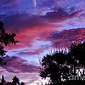 Lavender Pink And Blue Sunrise by Jay Milo