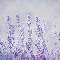 Lavender Romance by Claudia Moeckel