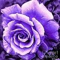 Lavender Rose With Brushstrokes by Barbara Griffin