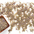 Lavender Seeds by Olivier Le Queinec