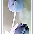 Lavender Tulips by Danielle  Parent