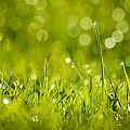 Lawn Twinklers by Bill Pevlor