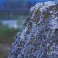 Lay On My Hidden Rock by Donato Iannuzzi