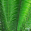 Layered Ferns I by Nancy Mueller