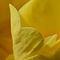 Layered In Yellow by Donna Blackhall