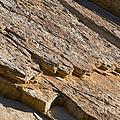 Layered Rock by Bob Phillips