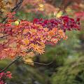 Layers Of Autumn Red by Mike Reid