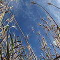 Laying In A Feild Looking Up by Chris Artist