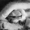 Lazy Day Bw by Joan Wallner