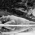 Lazy Days by Rick Kuperberg Sr
