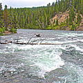 Le Hardy Rapids In Yellowstone River In Yellowstone National Park-wyoming   by Ruth Hager