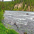 Le Hardy Rapids Of Yellowstone River In Yellowstone River In Yellowstone National Park-wyoming   by Ruth Hager