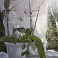 Le Orchidee Sfumate by Danka Weitzen