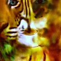 Le Tigre  by Pikotine Art