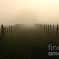 Lead Me To The Light by Douglas Stucky