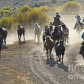 Leading Horses To Pasture by Sean Stauffer