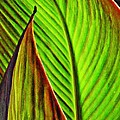 Leaf Abstract 4 by Sarah Loft
