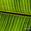 Leaf Abstract by Grace Dillon