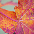 Leaf Abstract In Pink by Irina Wardas