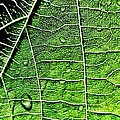 Leaf Abstract - Macro Photography by Marianna Mills