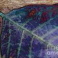 Leaf Abstract by Scott Pellegrin