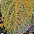 Leaf After Rain by Bill Owen