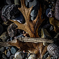 Leaf And Stones by Ronald Grogan