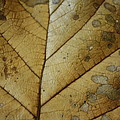 abstract Leaf by Arelys Jimenez