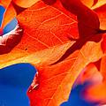 Leaf by Brandon  Ostermiller
