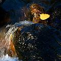 Leaf Bridge Two by Vinnie Oakes